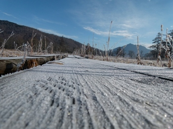 木道の霜.JPG