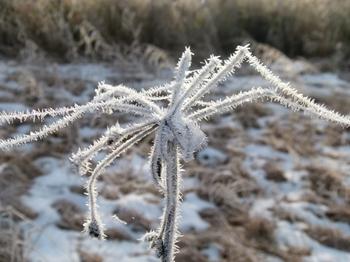 霜がついた蜘蛛の糸2.JPG